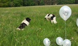 SgR Ballon1